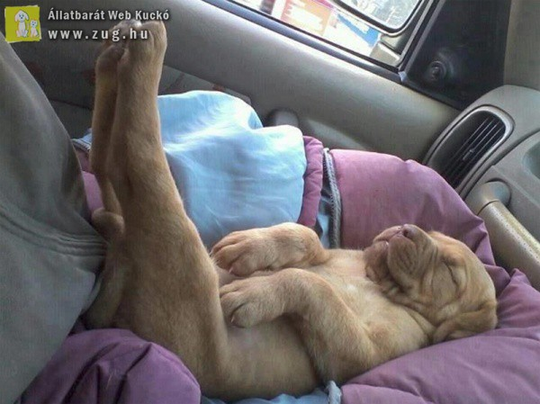 Fő a kényelem