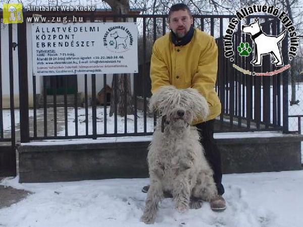 Fürge az állatbarátok álatl felajánlott adóegyszázalékoknak is köszönhetően menekült meg