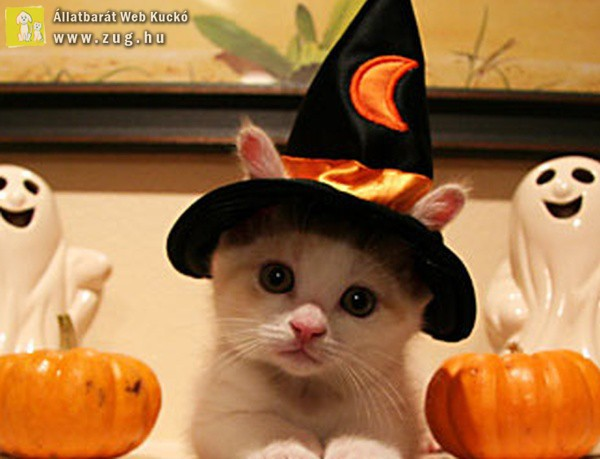 Halloween cicus