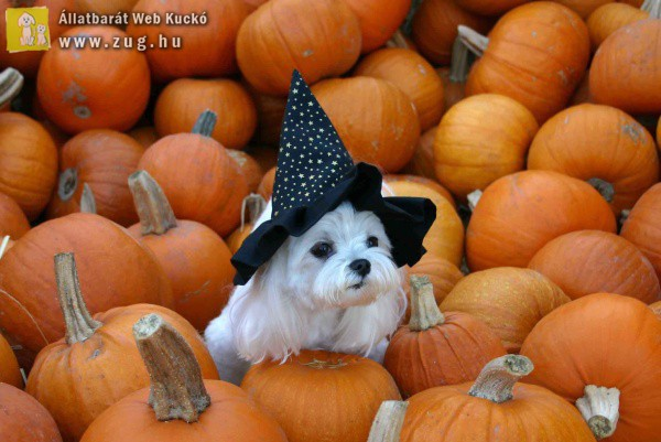 Halloween-i kutyus