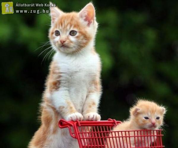 Hétvégi bevásárlás cica módra