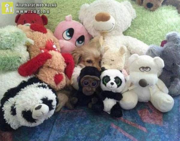 Hol a kutya a képen? :)
