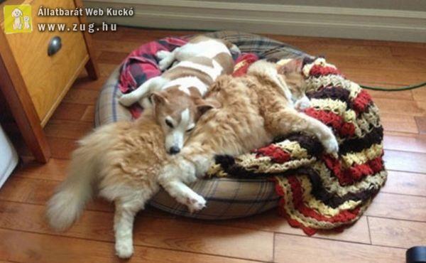 Igazi kutya-macska barátság
