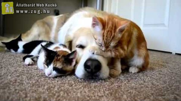 Ilyen a közös pihenés