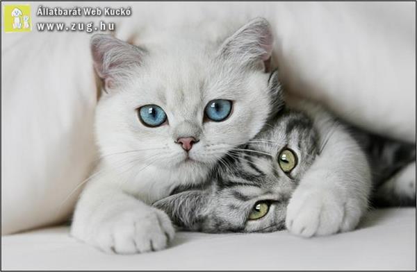 Itt a cica, hol a cica