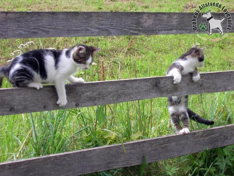 Játékos cicák a szabadban