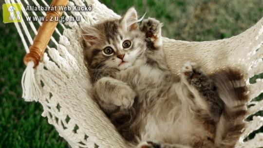 Játékos kiscica