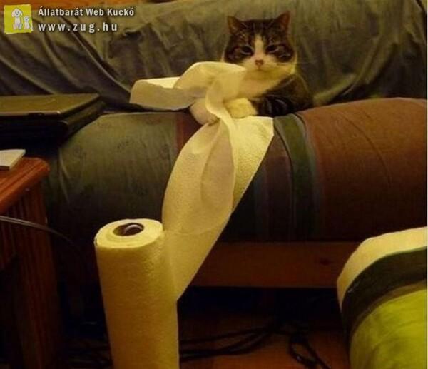 Jó móka a papírtörlővel játszani
