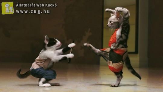 Karatézó macskák