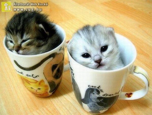 Két bögrényi kiscica