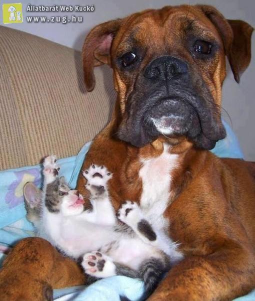 Kis cica-nagy kutya