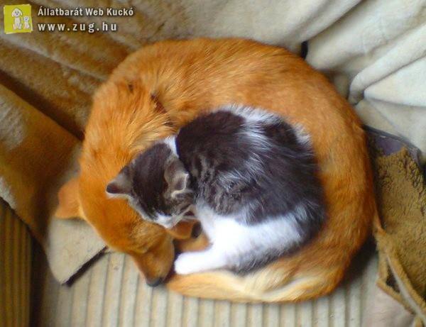 Kutya-cica: Kiskifli, nagykifli