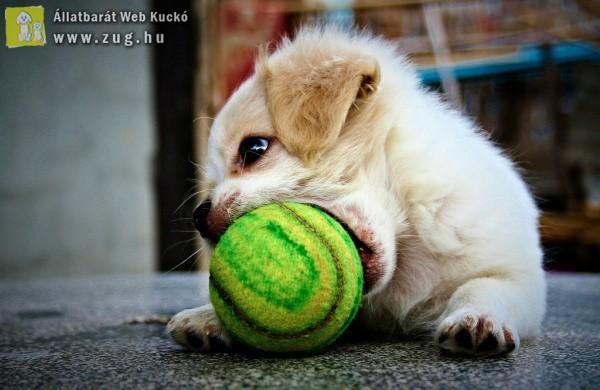 Kiskutya-nagy labda