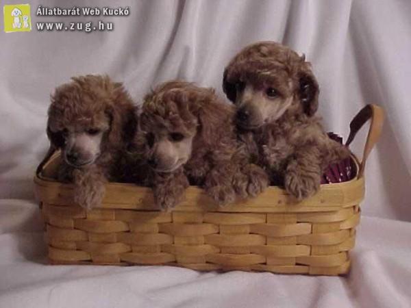 Kosárkás kutyusok
