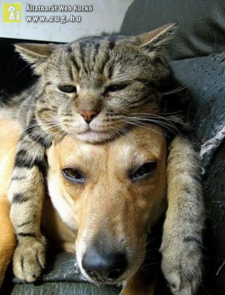 Közös délutáni pihenő