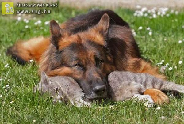 Közös pihenés kutya-cica módra