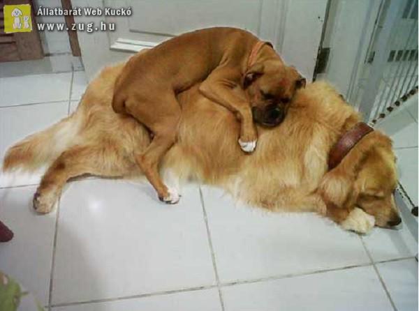 Közös pihenés