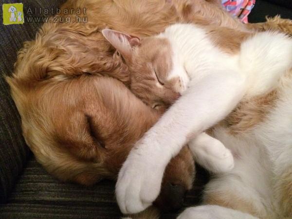 Cica-kutya közös szundi