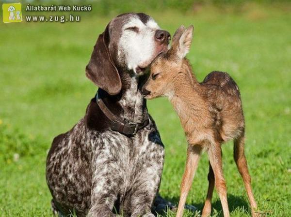 Különös barátság