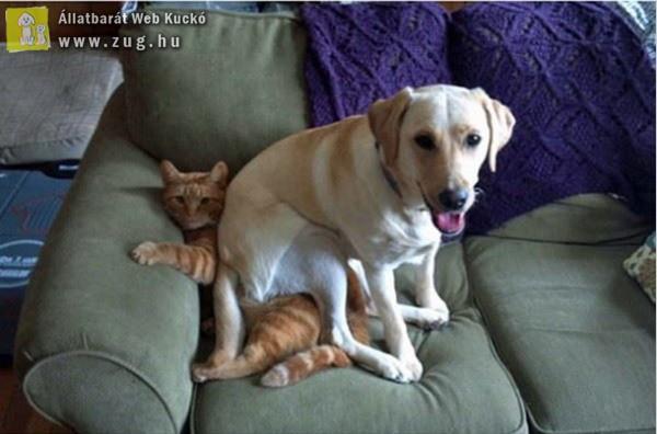 Kutya a macskán