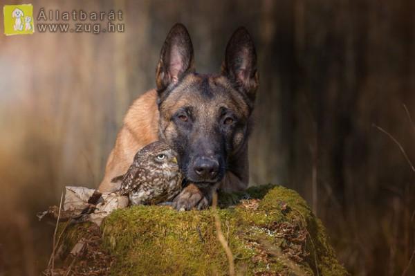 Kutya-bagoly barátság