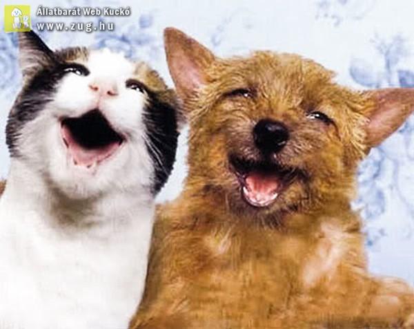 Kutya-cica mosoly