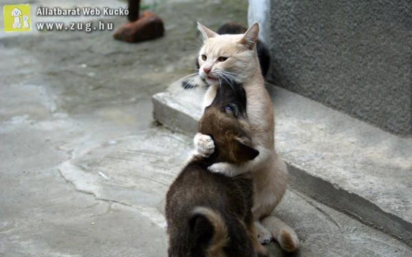 Kutya-cica ölelés