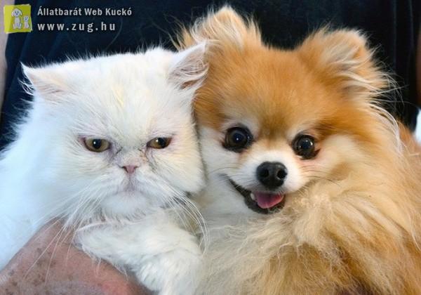 Kutya-cica selfie