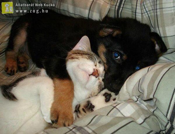 Kutya-cicus páros
