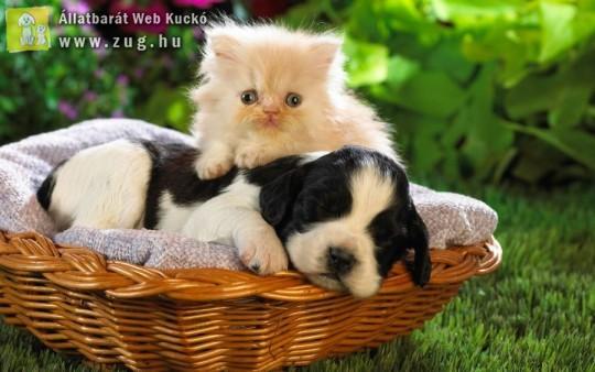 Kutya és cica egy kosárban