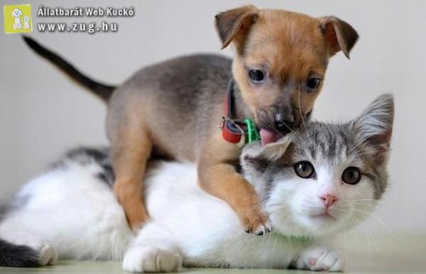 Cica hátán kutya
