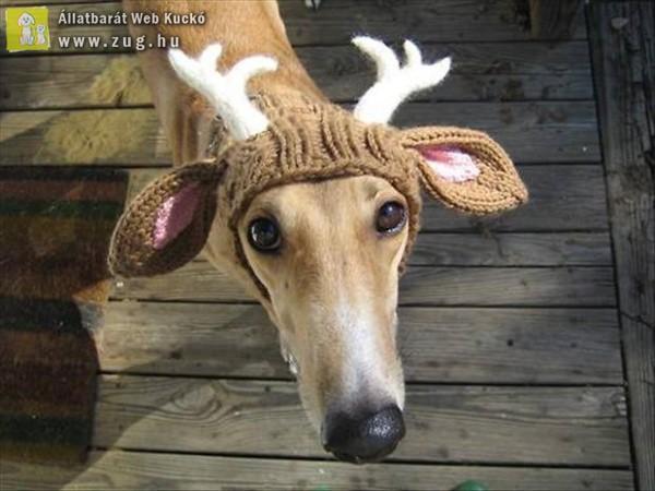 Kutya vagy rénszarvas
