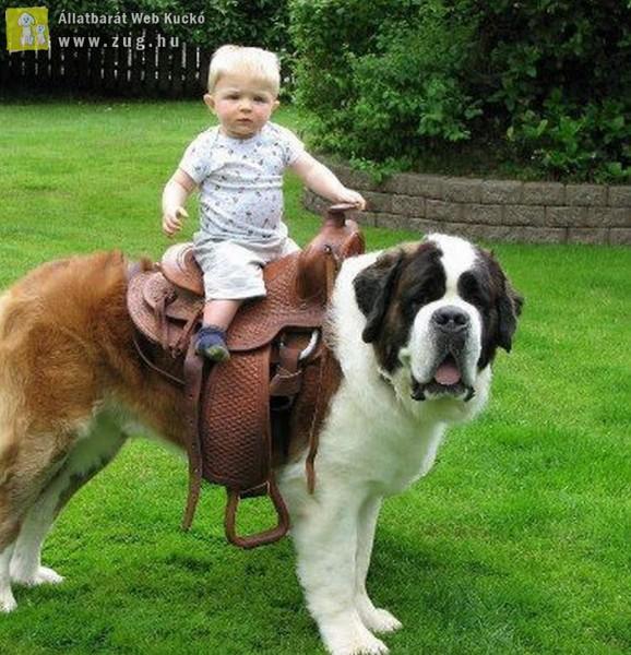 Kutyagolás