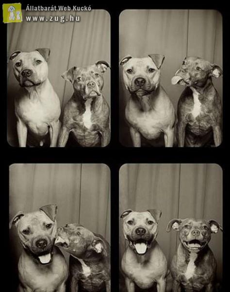 Kutyák a fotóboxban