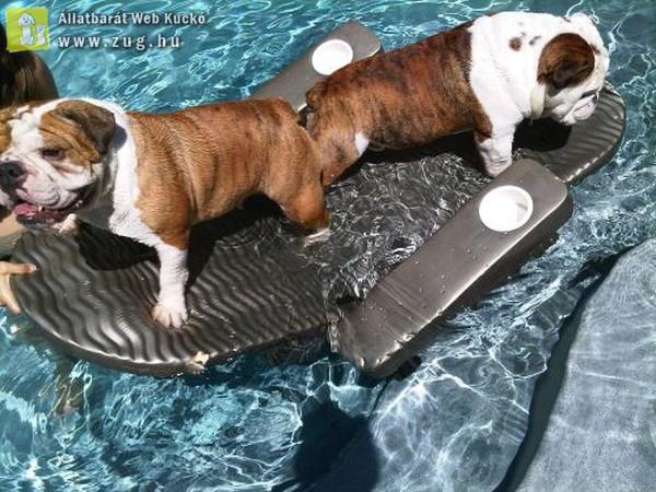 Kutyák a vízben