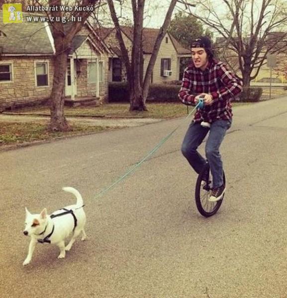 Kutyasétáltatás egykerekezve