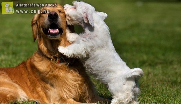 Kutyaszeretet