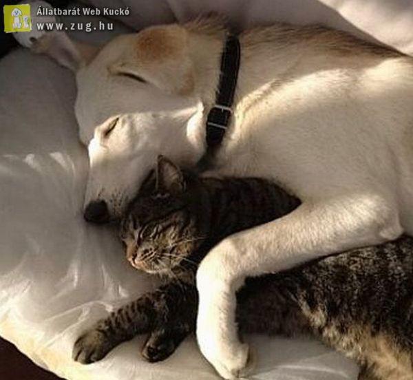 Kutyus és cicus együtt pihen a nagy melegben