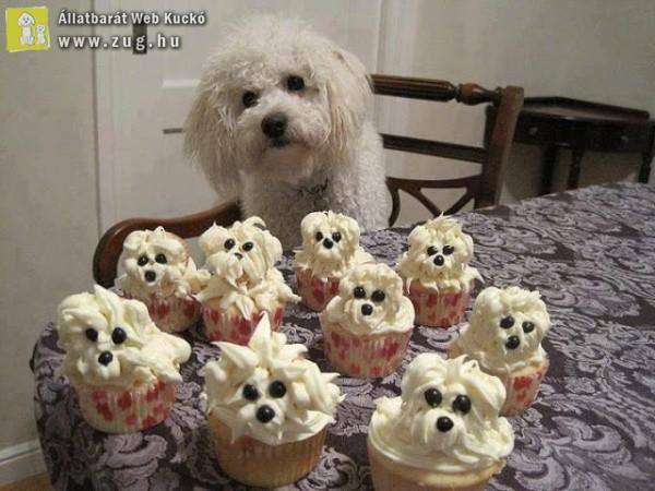 Kutyus és kutyusmuffin