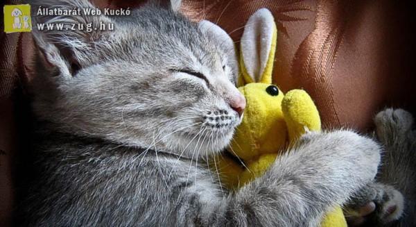 Lustálkodós cica