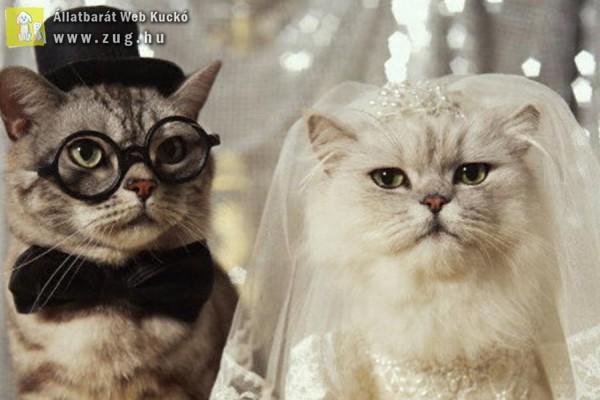 Macska esküvő
