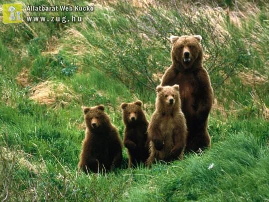 Medvecsalád