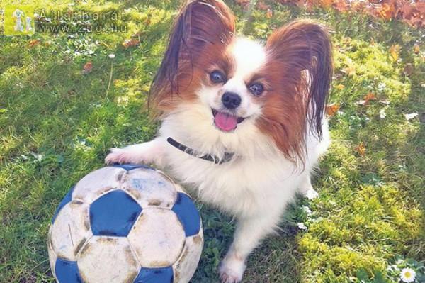 Mehet a labdázás?