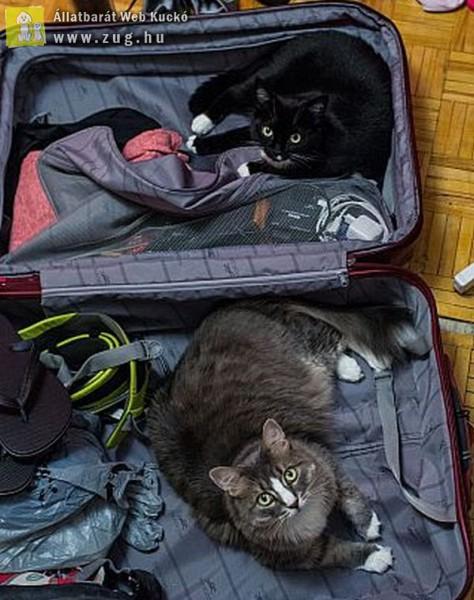 Minket nem visztek nyaralni?