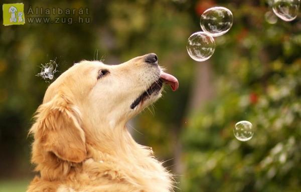 Mókás buborékok