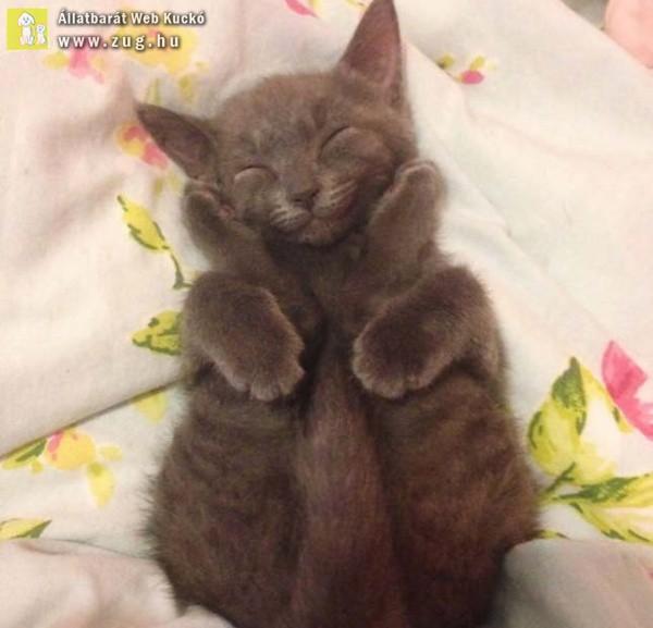 Mosolygós cica
