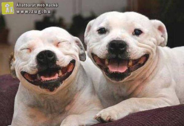 Mosolygós kutyák