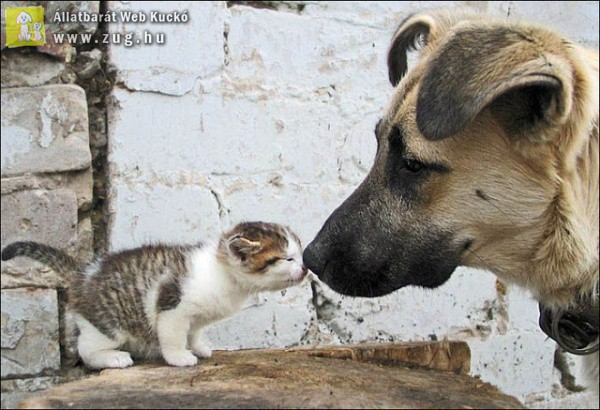 Nagy kutya-kis cica