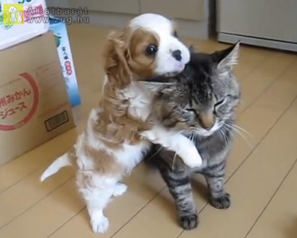 Kutya-cica szeretet