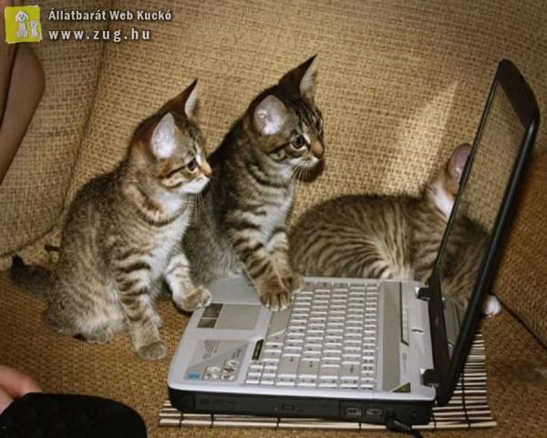 Netező cicusok